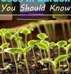 Hydrogen peroxide plants