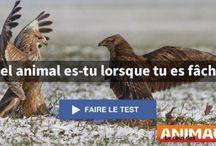 Quizzes / Tous les QUIZZES su site http://www.lecoindesanimaux.net