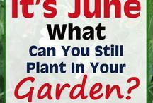 June planting