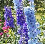 Pflanzen - Gruppe blau