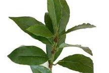Health / Natural Organic Solutions