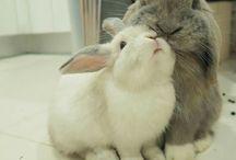 Bunny ♡