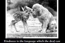 Kindness / Kindness