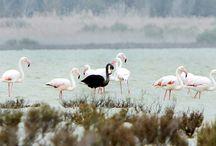 Birds of the World / by Debbra Brouillette