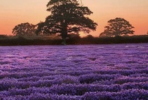 Provence and France / Photos to help me plan for a trip to Provence.