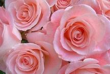 Flowers / by Bridget Scoggins