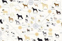 Zajímavosti z psího světa