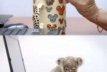 Sweet Baby Animals!