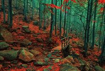 Autumn / by Linda Myers