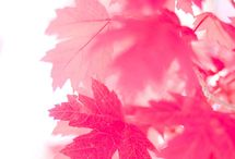 Autumn trends / Trendy pink colours in autumn and winter time