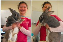 Giant Rabbits