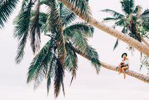 ...trees…