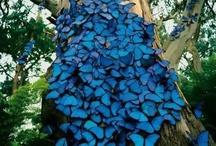 Butterflies, Dragonflies, and Moths / by Rebecca Shook