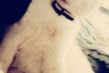 Macskám ; my cat