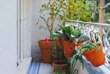 Jardins na varanda