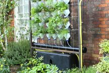 urban gardening / by Courtney Kirker