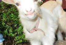 Totes My Goats / by Gina Soileau