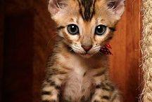 Katzenbabys / Süße, lustige oder einfach nur schöne Fotos von Katzenbabys