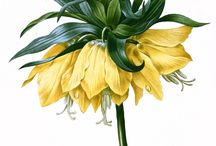 цветы / Цветы