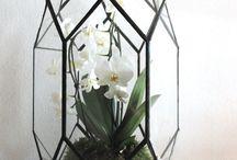 Gardening_Terrarium_