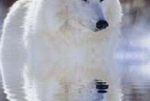 Wolves are Mystical