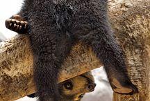 Animals: Bears