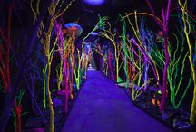 Meow Wolf / Meow Wolf is an arts collective based out of Santa Fe, New Mexico established in 2008.