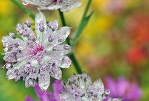 Blommor , Trödgård