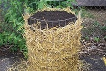 Edibles / Vegetable gardening ideas