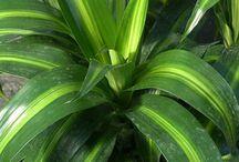 plante interieue