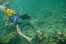 pari island,indonesian