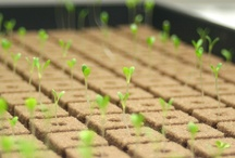 our hydroponic garden / by Fresh Nation