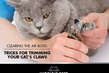 "Clearing the Air Blog Posts / The World's Best Cat Litter blog ""Clearing the Air"" has lots of helpful tips and advice for you and the cats you love!"