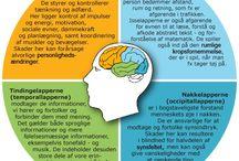Menneske fysiologi , anatomi