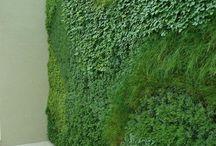 Zöld homlokzatok