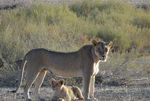 Kgalagadi Sept 2014 / Wildlife photos