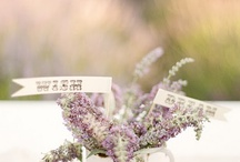 Wedding - decor - lavender