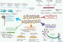 psiestudo