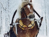 finnhorses / Those little shits, someday I'll have my own finnhorse.