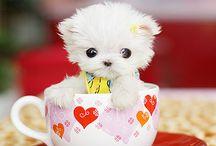 Cutest Animals Ever / My heart melts. / by Maddie Brady