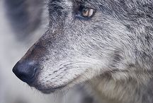Loups / by Audrey Letellier
