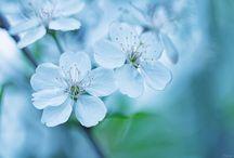 My photos: flowers&plants / My macro photoworks