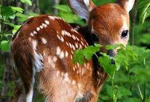 Tiere - Wunder schöne Tier und FotoWelt