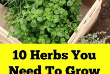 Herbs that I need to grow!
