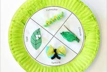 ciclo das borboletas