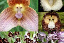 giardino le orchidee - orquídeas de jardín