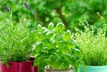 8 remèdes naturels à faire pousser chez soi