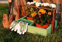 Eco Living: Home