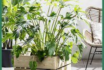 Home - Planten binnen