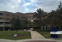 UNF Academics / Learn more about UNF's six Flagship Programs and the other nationally recognized degree programs at UNF!